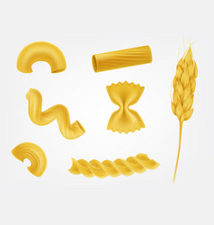 pasta types and forms realistic set vector image