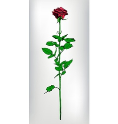 Single long stem red rose hand drawn realistic vector