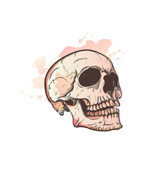 Skull and watercolor blots vector