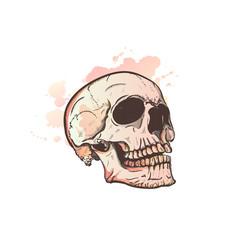 skull and watercolor blots vector image vector image