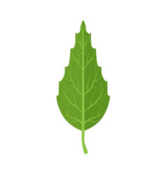 Beech tree green leaf vector
