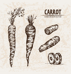 digital detailed line art carrot vector image