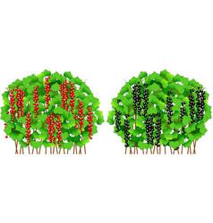 Currant bush vector