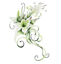 Watercolor white lilies vector image vector image