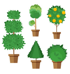 Set of street trees and shrubs in pots vector