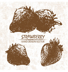 Digital detailed strawberry hand drawn vector