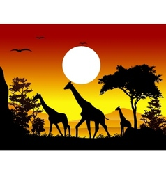 giraffe silhouettes with landscape background vector image
