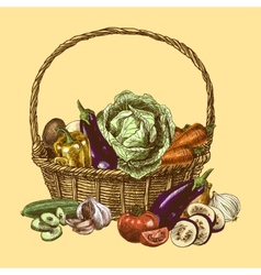 Vegetables sketch color vector image