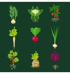 Fresh vegetable plants with roots collection vector