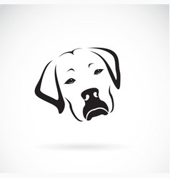 Dog headlabrador retriever on white vector