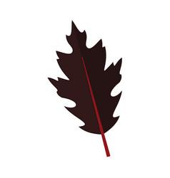 Dark dry oak leaf graphic vector