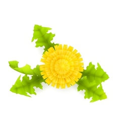 Yellow dandelion vector