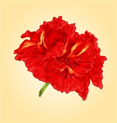Flower red hibiscus blossom simple tropics flower vector image