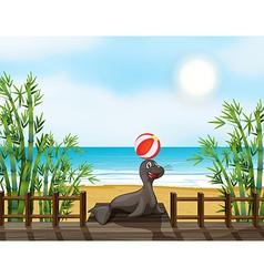 Cartoon Seals vector image vector image
