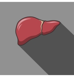Liver icon with long shadow vector image