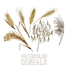 Collection of watercolor cereals vector