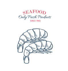 hand drawn shrimps icon vector image vector image