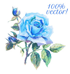 Watercolor drawing of blue rose vector
