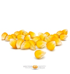 Scattered grains of corn vector