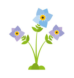 pansy flower plant nature vector image