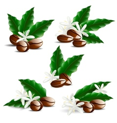 Single coffee bean with leaf isolated on white vector