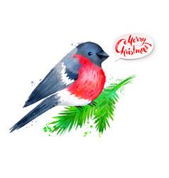 christmas watercolor of bullfinch vector image vector image