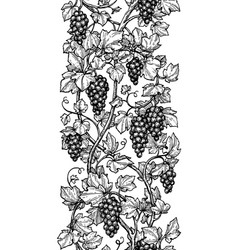seamless of grapes vector image