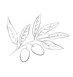 Hand drawn olive branch vector image