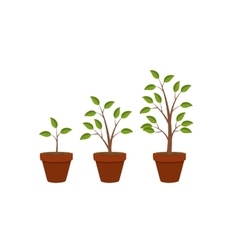 Abstract flat nature plants growth graphic design vector