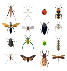 Insect icons set isolated on white vector image vector image