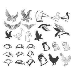 Set of birds eagle duck goose chicken design vector