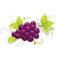 grapes background vector image vector image
