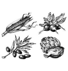 Vegetables set isolated drawings black over white vector image