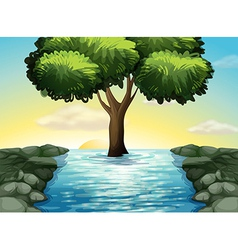 A big tree in the middle of the river vector image vector image