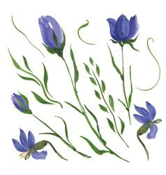 Blue flowers vector