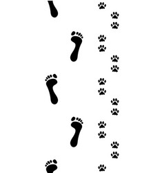 feet and dog paws vector image vector image