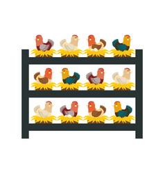 chicken farm animal vector image