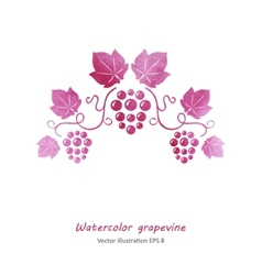 Watercolor style green grapevine vector