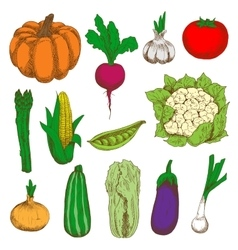 Colored sketched vegetables for agriculture design vector