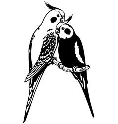 Cockatiels black white vector