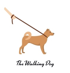 Akita inu with a leash - dog asian breed on white vector