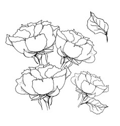 rose bouquet liner on white vector image vector image