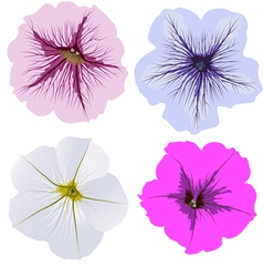 Set of four petunia flowers vector image