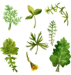 Set of watercolor drawing herbs and leaves vector