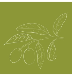 Two olives on branch with leaves isolated on green vector image vector image