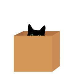 black cat in a box vector image
