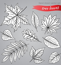 Botanical set highly detailed hand drawn leaves vector