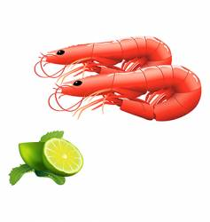 shrimps vector image