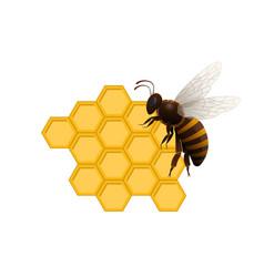 Natural sweet delicacy symbol with honeybee vector