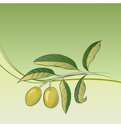 Two olives on branch vector image